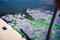 Our Lakes are in Danger! Act now Milwaukee!
